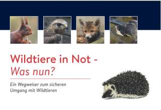 Wildtiere in Not -Was nun?